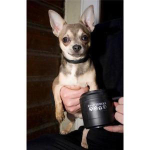 Фотография товара Лапомойка для маленьких собак Paw Plunger, черная