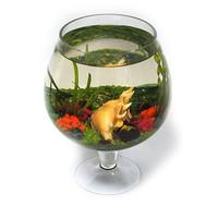 Фотография товара Аквариум для рыб Стандарт Бокал