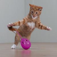 Фотография товара Игрушка для кошек Trixie Pop-Up-Egg